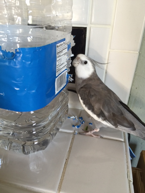 """Yup, Mom - this here is """"Water Bottle"""" and he says he needs a home makeover. I'm just about to get started so I might be awhile."""