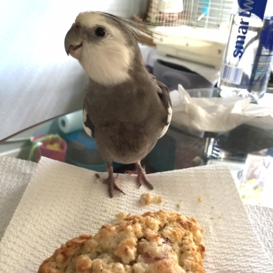 My large featherless assistant must have figured out I was feeling peckish....maybe it was all the screaming.