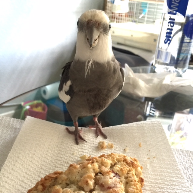 """So I'll just put on my """"neck feather napkin"""" for another session of refined dining, avian-style."""