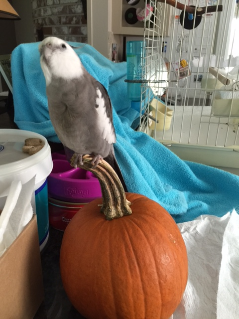 My pumpkin really is rather sweet. I can't bear to break the news that the paparazzi aren't here for him.