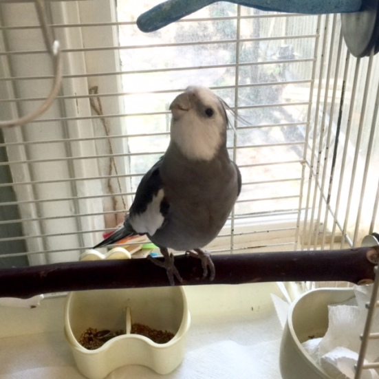 And the lighting is very good to highlight my grey and white manly plumage.