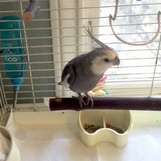 "So here I am, sitting on my manly manbird ""big perch."""