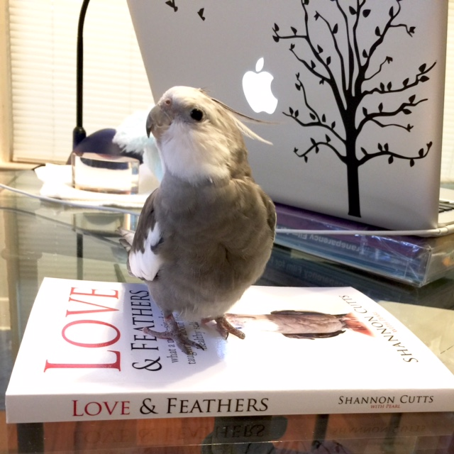 Let's photograph this cute feathery side first!