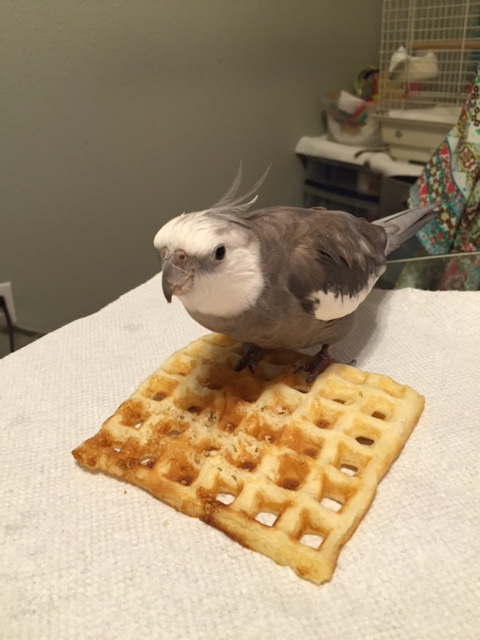 First. you want to walk right onto the waffle and grip it in your powerful talons.