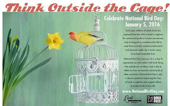 Click on the poster to learn more about National Bird Day activities!