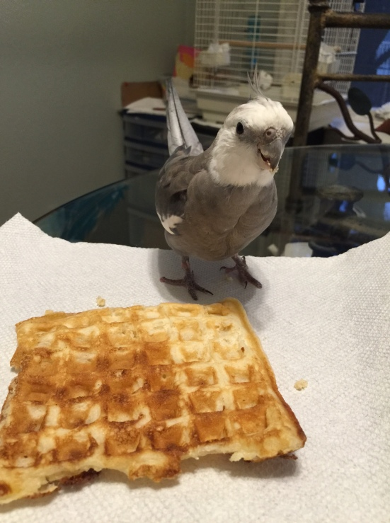 Pearl celebrating National Waffle (um, Bird) Day...while keeping a close eye out for poachers...