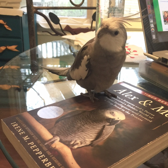 """The literary expert (with feathers) reinforces how grey-and-white feathers is really the """"it"""" look this season (and every season)!"""