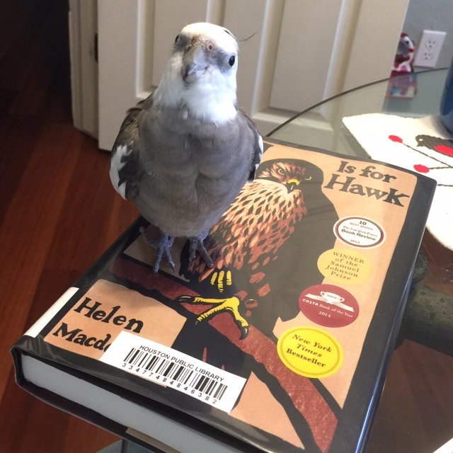 """A certain feathery literature expert poses with (on) the """"book o' the week."""""""