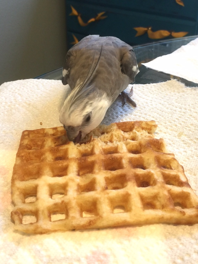 """The Q&A Expert fortifies himself with the world's tastiest delicacy, the """"waffle."""""""