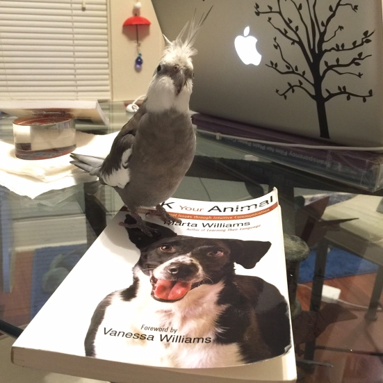 A literature lover (with feathers) poses with a topic he feels is particularly timely and important.