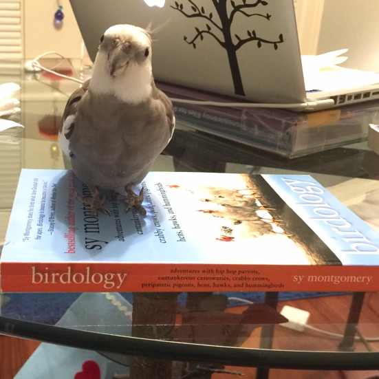 """An expert feathery member of the literati posing """"with book."""""""