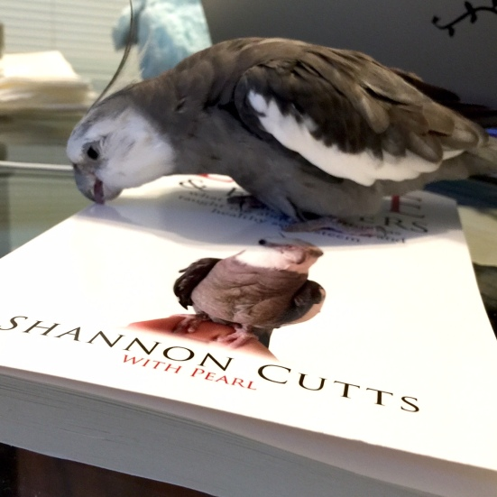 Pearl, also showing off grey and white feathers while crunching on the crispy cover of his new book.