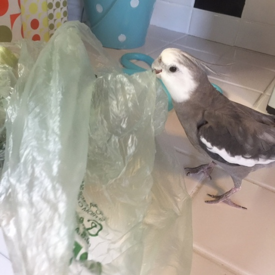 Happiness is....when your mommy goes to the store and brings back the crinkliest plastic bag just for you!