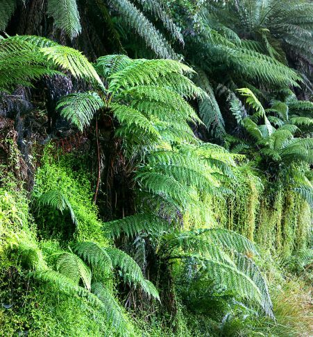 "A great and glorious modern gathering of the ancient crunchy green beings known as ""ferns."""