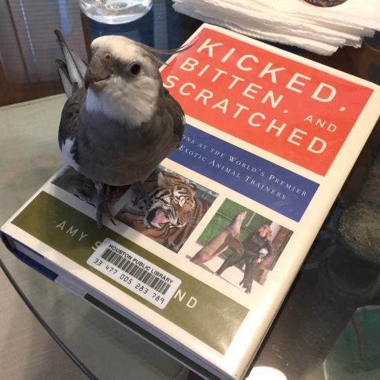 KickedBittenScratchedBook