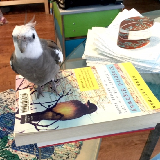 Pearl showcases how much more compelling the cover art would have been with a hookbill species on the cover.