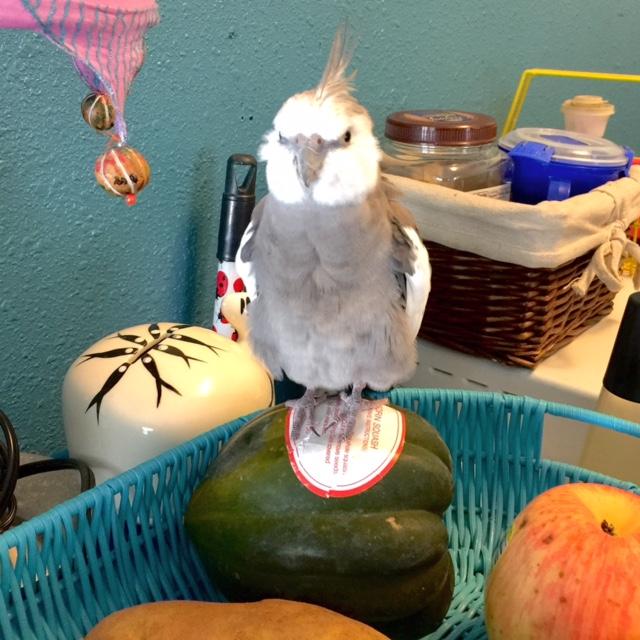 squashfruitbowl