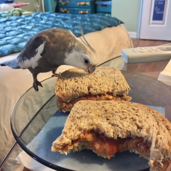 Happiness is....when your mommy fixes you a delicious organic PB&J all for you!