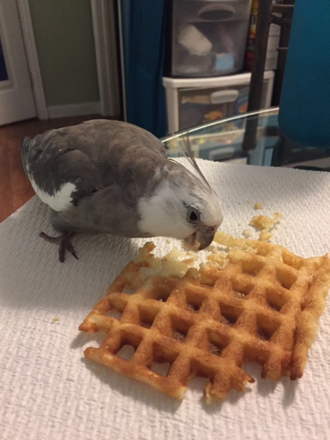 """Aha! I know you. You are """"Waffle."""" I've had my eye on you a long time."""