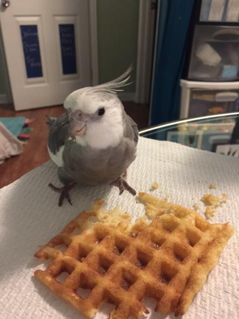 waffle6