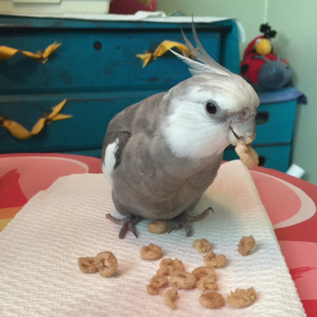 Pearl, enjoying happiness-producing crispy delicacies that are all for him.
