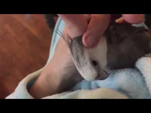 neckfeathersvideo