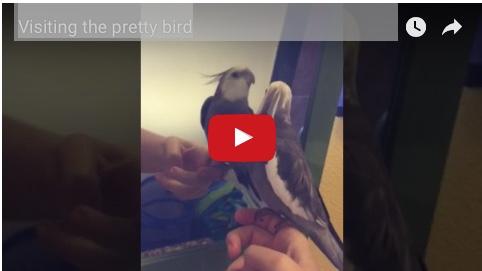 visitprettybird