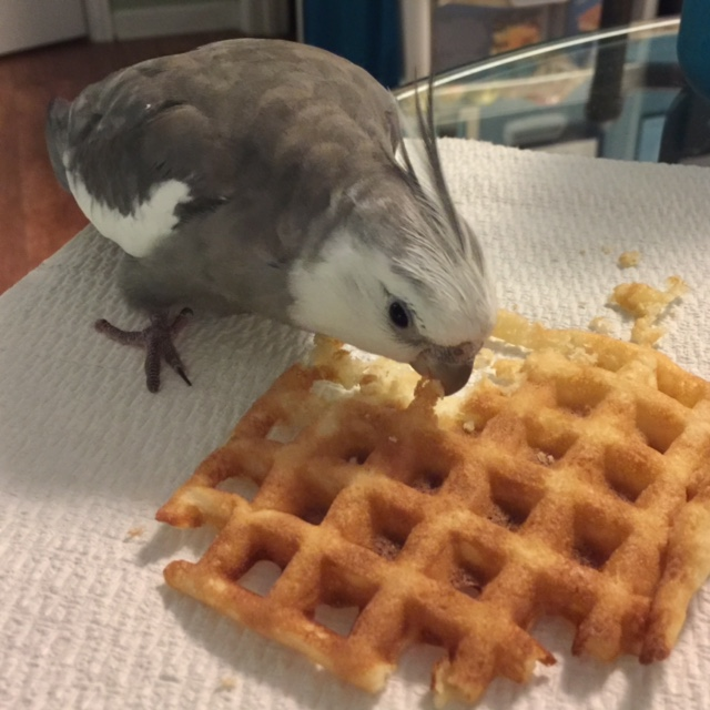 "Pearl demonstrates the proper ""waffle taste test stance"" he uses for all new waffle recipes."