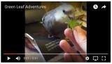 Video Wednesday: Green LeafAdventures