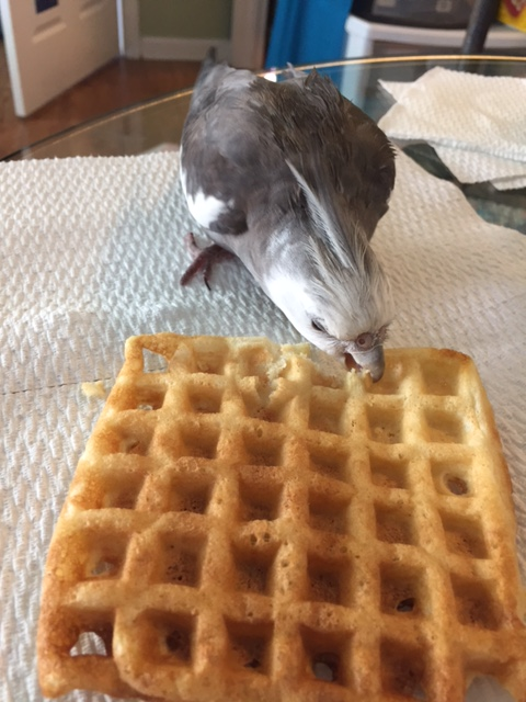 """Nom, nom, nom.....ah! I've got it! You are """"Waffle!"""" No sense trying to hide from a """"black-ops"""" agent, you know. We always (er) waffle the truth out of you one way or another...."""