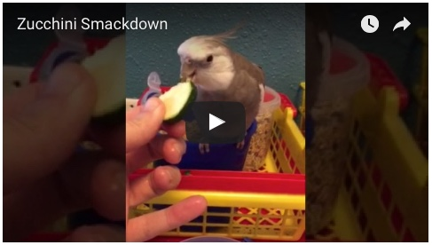 zucchinismackdownvideo