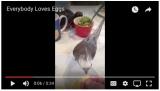 "Video Wednesday: ""Everybody LovesEggs"""