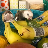 Monday Happys: Banana HuntingSeason