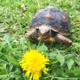 Tortoise Versus Turtle