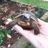 Tortoise Care Books &Resources